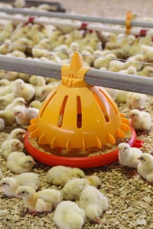 Avicultura SKA Poultry Equipment, Sandrigo - Luce&Light - kronwell
